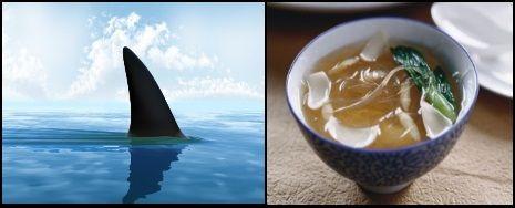 gute suppe kitesurfen mallorca keine haifish