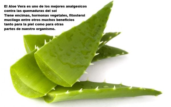 aloe vera a heal for your skin